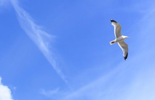 Emoce jako pták, který letí oblohou