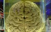 Je Vědomí v mozku? - Rupert Spira